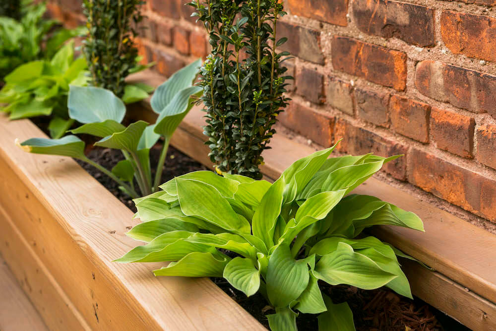 Image of a wooden built-in planter in a backyard