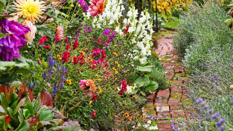 Vibrant Blooming Plants for a Late Summer Garden