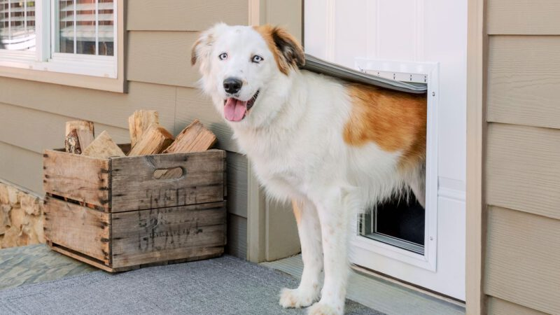 Everything to Know About Dog Doors