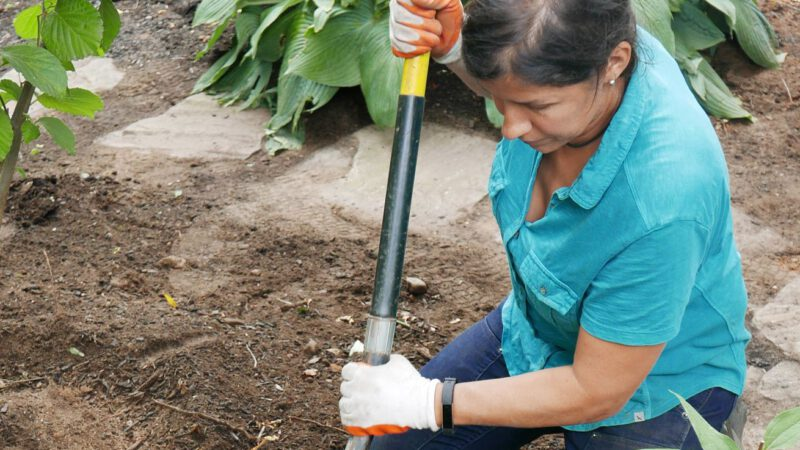 End-of-Summer Yard and Garden Cleanup Tips