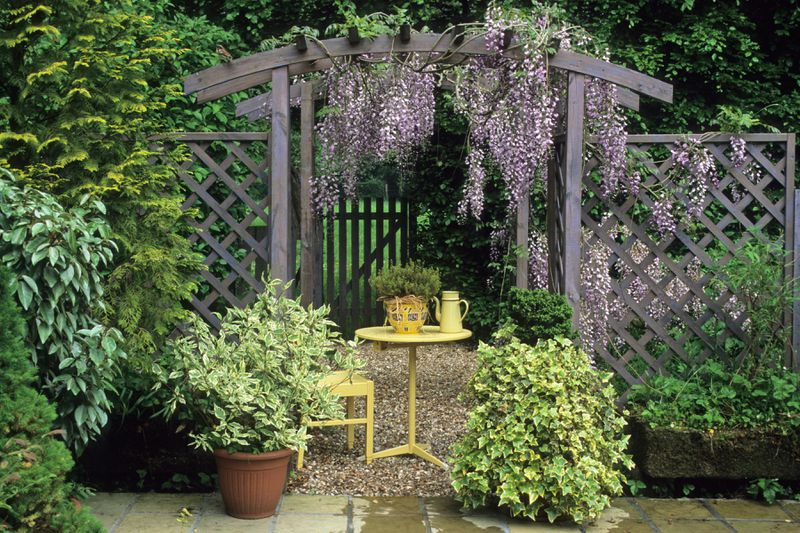 A small pergola in a garden with purple wisteria hanging from it. A small yellow table and chair sits under the shade.
